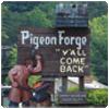 100-pigeon
